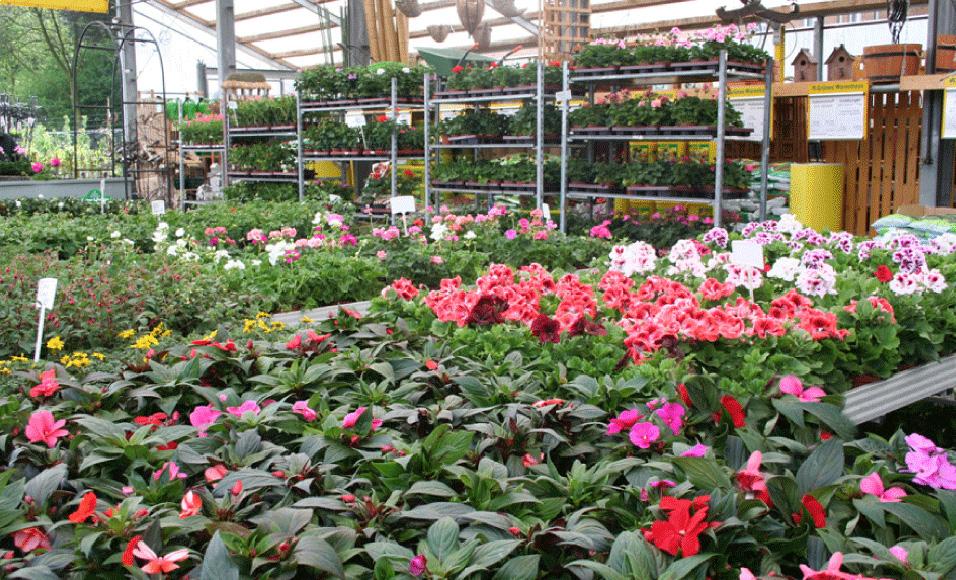 Pflanzenwelt für den Außenbereich