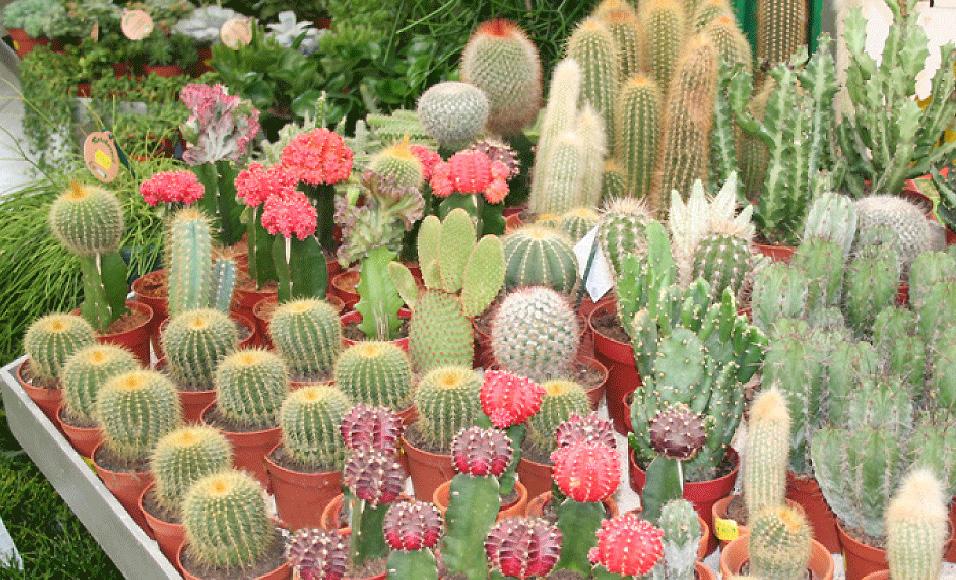 Pflanzenwelt für den Innenbereich